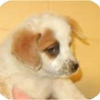 Adopt A Pet :: Tara ADOPTED!! - Antioch, IL