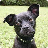 Adopt A Pet :: Willie - Mocksville, NC