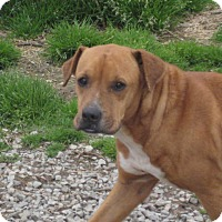 Adopt A Pet :: Angel - Boaz, AL