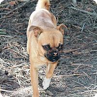 Adopt A Pet :: Paisley - Greeley, CO