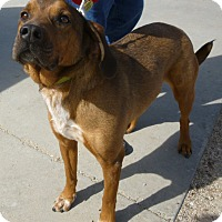 Adopt A Pet :: Max - Buffalo, WY