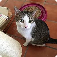 Adopt A Pet :: Young Harris - McDonough, GA