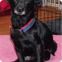 Adopt A Pet :: Jefe - Von Ormy, TX