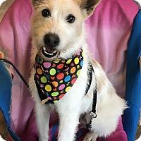 Adopt A Pet :: Rhett - Long Island, NY