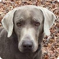 Adopt A Pet :: Flash - Birmingham, AL