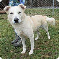 Adopt A Pet :: Oxford - Reeds Spring, MO