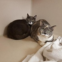 Adopt A Pet :: Miss Hissy and Turbo - Hollywood, MD