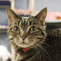 Adopt A Pet :: Koko - New Richmond,, WI