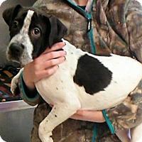 Adopt A Pet :: Melvin - Garden City, MI