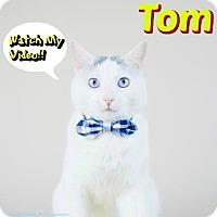 Adopt A Pet :: Tom - Sarasota, FL