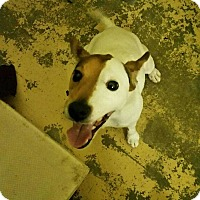 Adopt A Pet :: Colby - Wyanet, IL