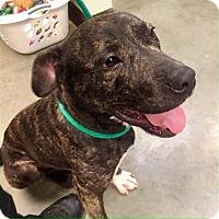 Adopt A Pet :: Fowler-URGENT - Plainfield, CT