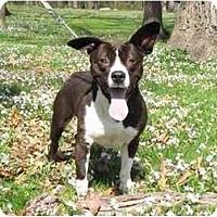 Adopt A Pet :: Micah - Chicago, IL
