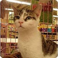 Adopt A Pet :: Valentine - Chesapeake, VA