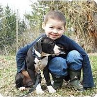 Adopt A Pet :: Ruby Lu - Dallas, PA