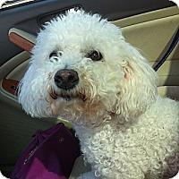 Adopt A Pet :: Joey - Minnetonka, MN
