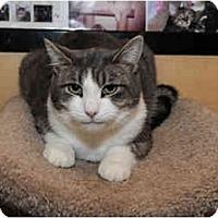 Adopt A Pet :: Handsome - Farmingdale, NY