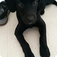 Adopt A Pet :: Slick Rick - Brewster, NY