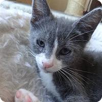 Adopt A Pet :: Tank - Colmar, PA