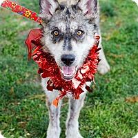 Adopt A Pet :: Julia - Brea, CA
