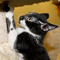 Adopt A Pet :: Claire - Columbus, OH