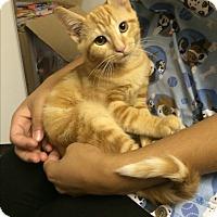 Adopt A Pet :: Ren - Richboro, PA