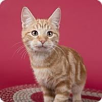 Adopt A Pet :: Banmi - Wilmington, DE