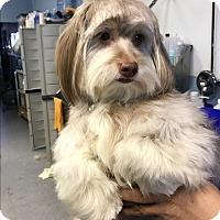 Adopt A Pet :: Weston - Thousand Oaks, CA