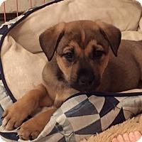 Adopt A Pet :: Jackson - Bernardston, MA