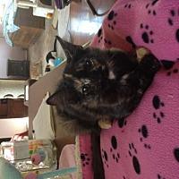 Adopt A Pet :: Fancy - Crestview, FL