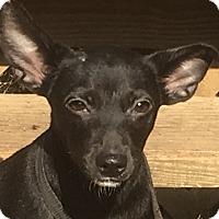 Adopt A Pet :: Rico - Staunton, VA