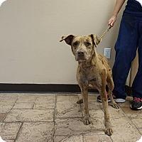 Adopt A Pet :: Red - Oviedo, FL