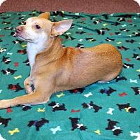 Adopt A Pet :: LayLay - Lumberton, NC