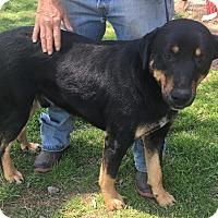 Adopt A Pet :: Ernie meet me 5/5 - Manchester, CT
