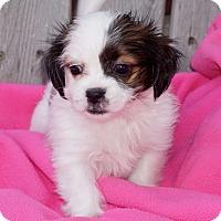 Adopt A Pet :: Lina - La Habra Heights, CA