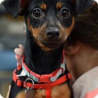 Adopt A Pet :: Lizzy - Memphis, TN