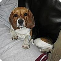 Adopt A Pet :: Miles (formerly Chiquito) - Phoenix, AZ