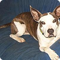 Adopt A Pet :: Georgia - Conway, AR