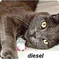 Adopt A Pet :: Diesel & Harley - Quincy, MA