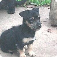 Adopt A Pet :: Monkee Kisses - Houston, TX