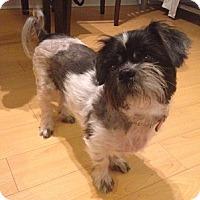 Adopt A Pet :: Kasey - Hamilton, ON