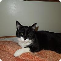 Adopt A Pet :: Vanna - Medina, OH