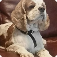 Adopt A Pet :: Murphy - Sacramento, CA