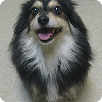 Adopt A Pet :: Lady - Gary, IN