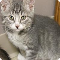 Adopt A Pet :: Poe - Medina, OH