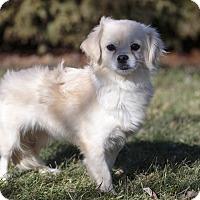 Adopt A Pet :: Marigold - Ile-Perrot, QC