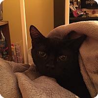 Adopt A Pet :: Spike - Jackson, NJ