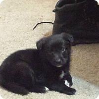 Adopt A Pet :: Koala - Davis, CA