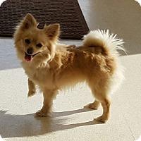 Adopt A Pet :: Roby - conroe, TX