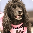 Adopt A Pet :: Lil Bitz